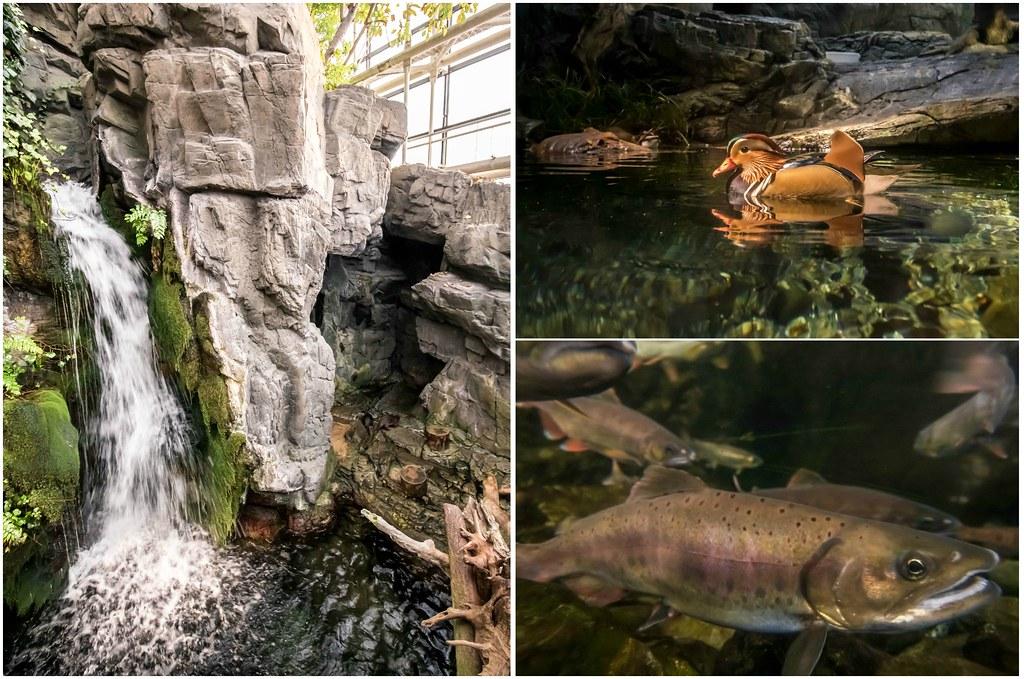 osaka-aquarium-japan-alexisjetsets