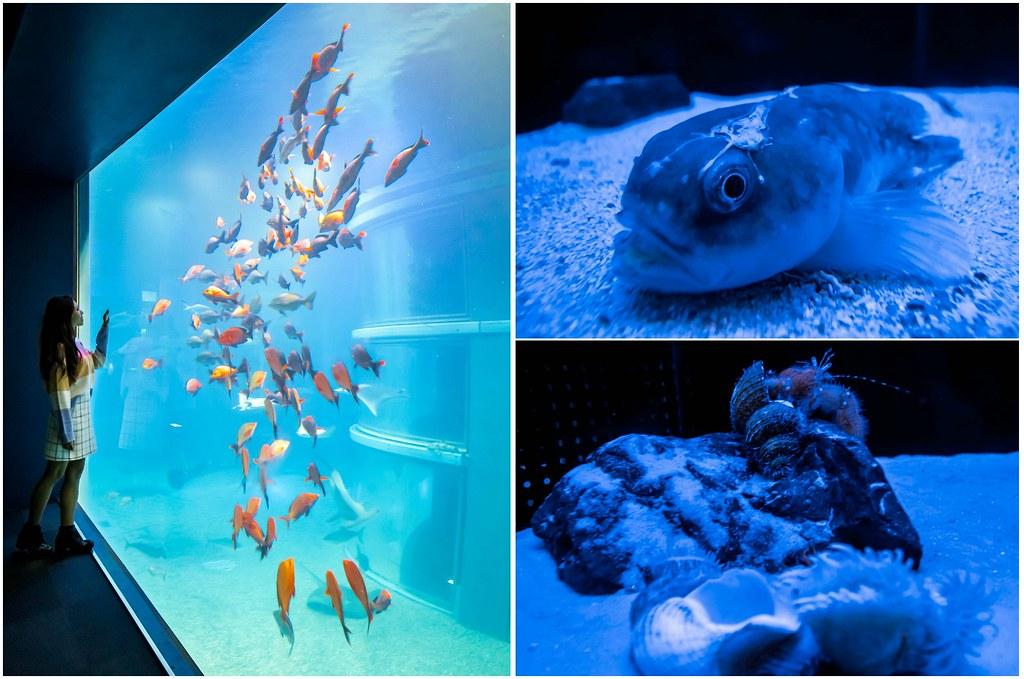 osaka-aquarium-deep-sea-alexisjetsets