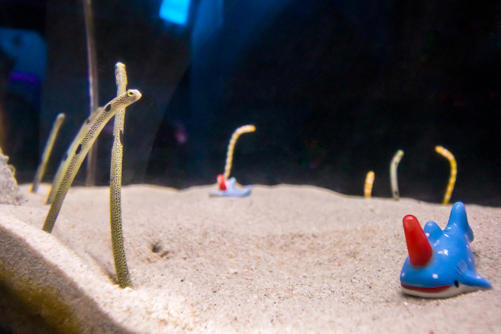 osaka-aquarium-kaiyukan-alexisjetsets-16