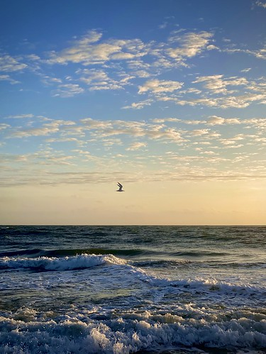 ocean birds sunrise iphone11promax dawn vero verobeach gregmcintosh