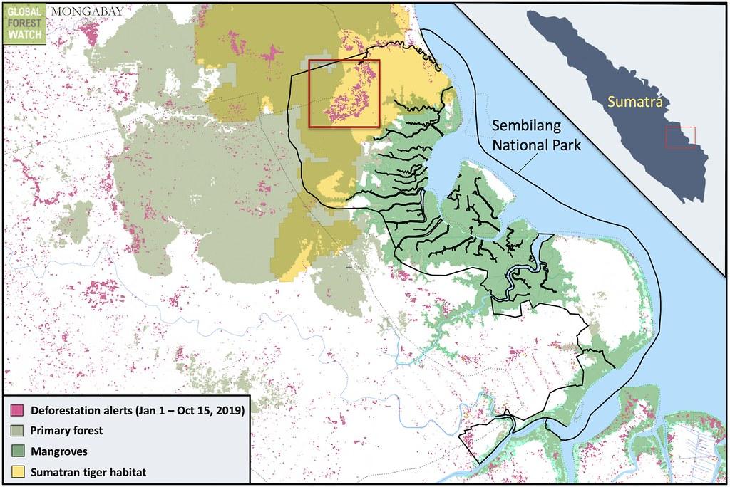 衛星資料顯示山碧朗國家公園裡大面積的森林遭火吞噬。北邊的火勢席捲部分僅存的原始森林,這裡也是極危蘇門答臘虎和蘇門答臘象的棲地。(資料來源:GLAD/UMD-全球森林觀察(Global Forest Watch)
