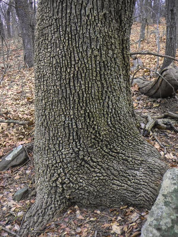 Turkey Mountain Tree Bark-1-Edit