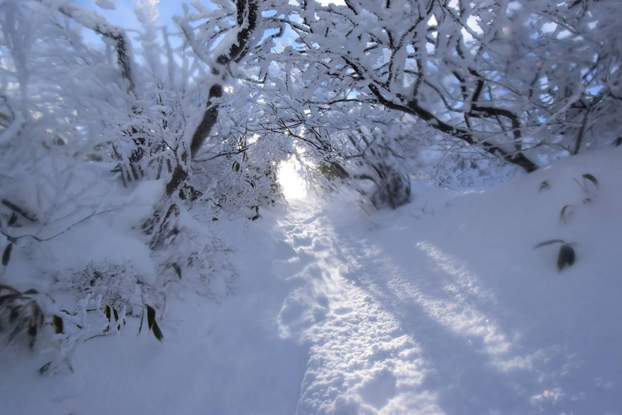 冬の磐梯山 樹のトンネル