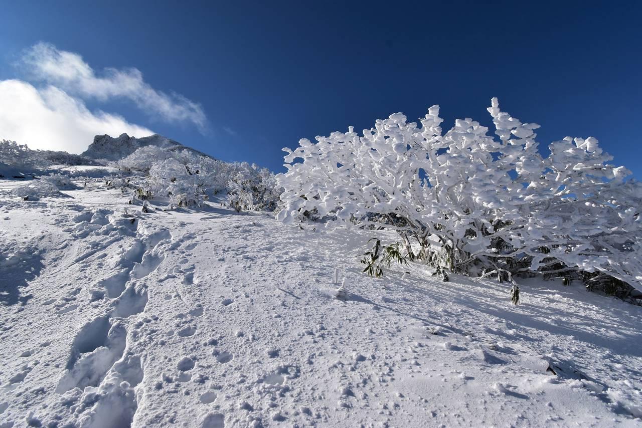 磐梯山 登山道の樹氷