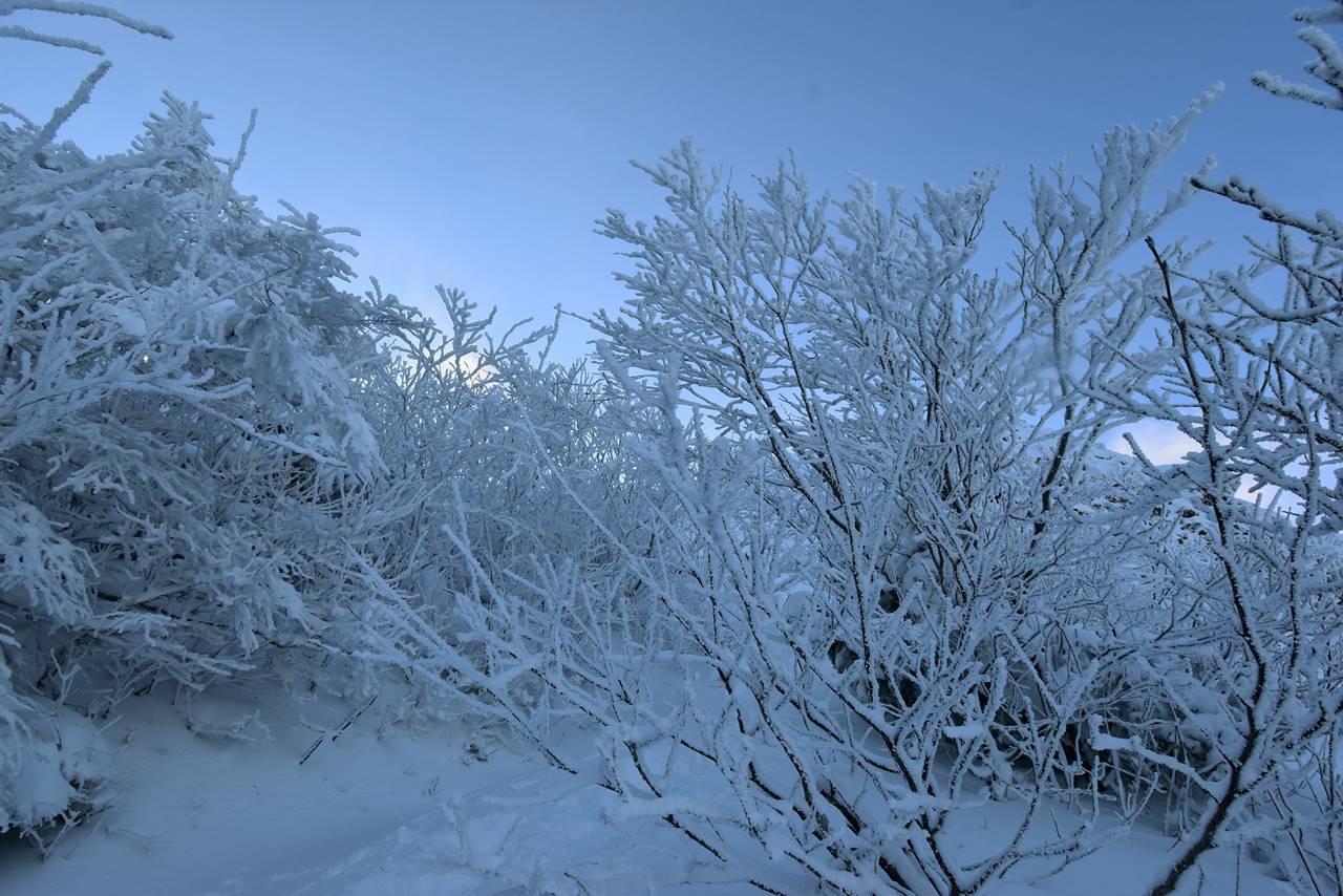 磐梯山の樹氷
