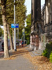 Free photo of Amsterdam city - picture of a view along Artis Zoo with urban trees in Autumn, by Fons Heijnsbroek