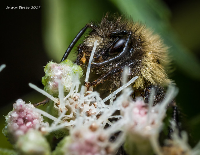 Dew Covered Bee