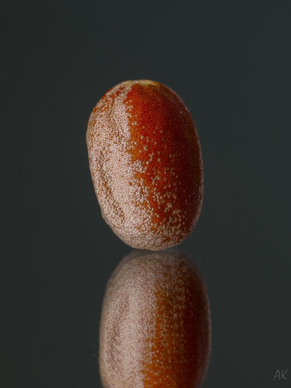 Russian olive (Elaeagnus angustifolia)