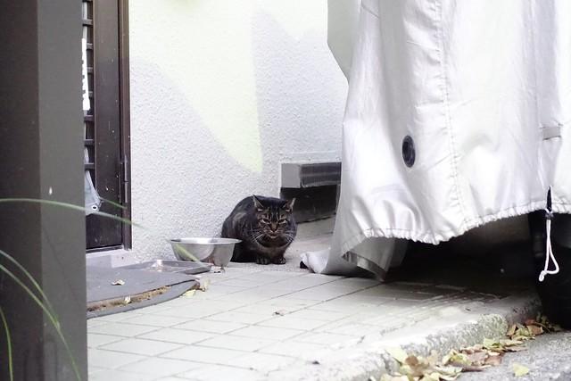 Today's Cat@2019-12-30
