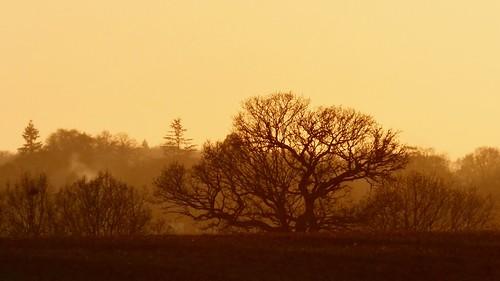 winter sunset berkhamsted common sky trees silhouette