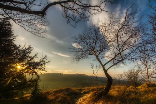 gloucestershire trees sunset hdr d7100 5xp