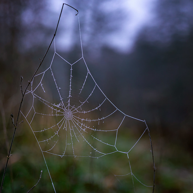 Icy web