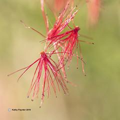 After the Storm - Desert Flower 0523