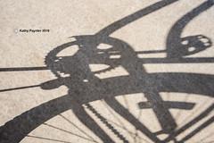 Shadow K75_0538IN
