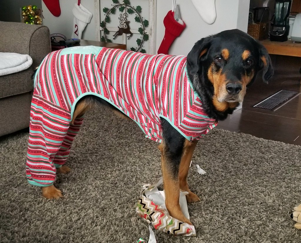 sasha rottweiler pajamas