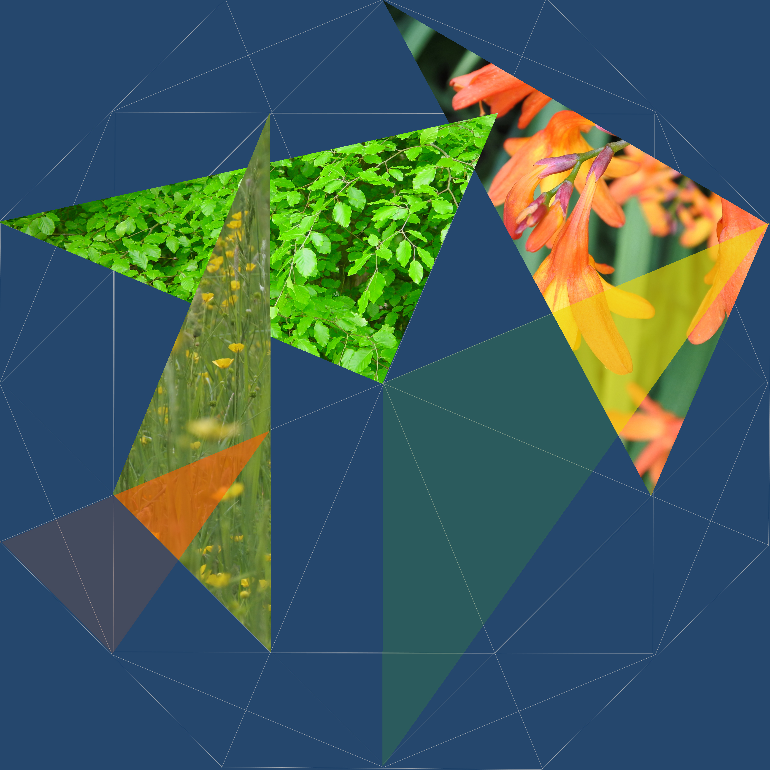 5 Triangles with leaves, spring grasses and orange flowers