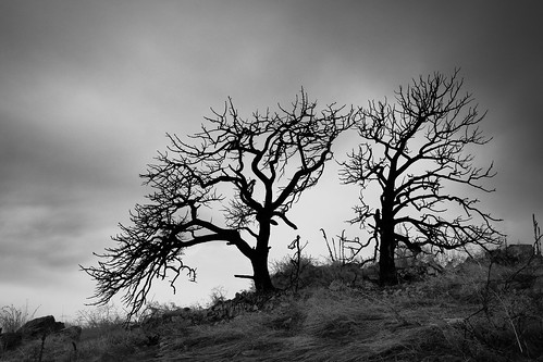 barren landscape sunset nature things landscapes clouds trees silhouette monochrome winter colorado sky places bw outside nopeople fortcollins us
