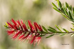 Desert Flower 0520
