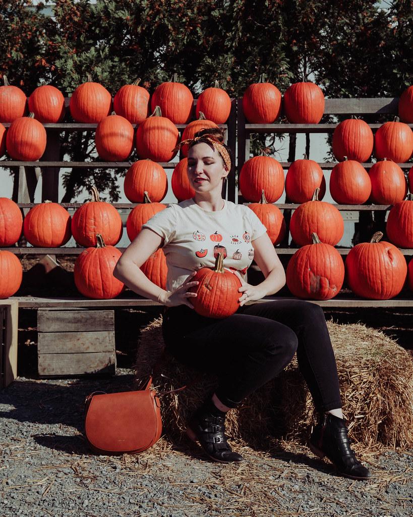 Golden Harvest Farms NEw York Pumpkin patch