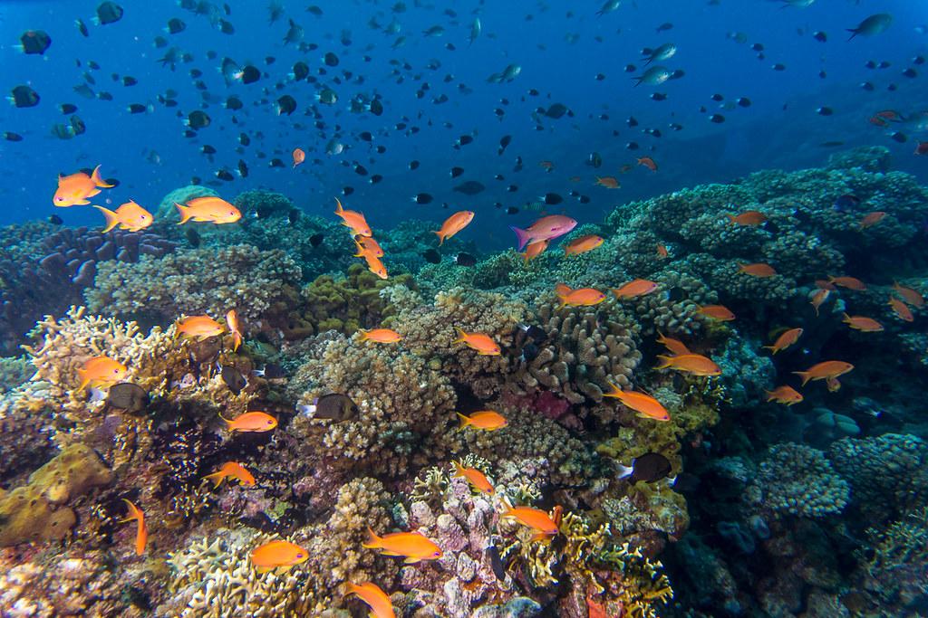Coral Reefs III