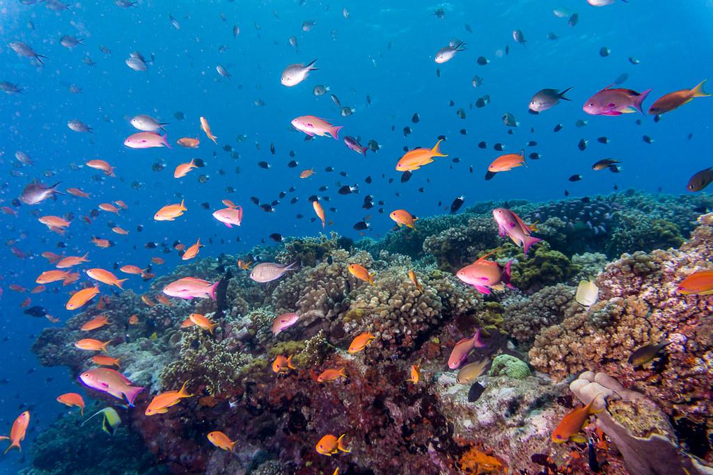 Coral Reefs II