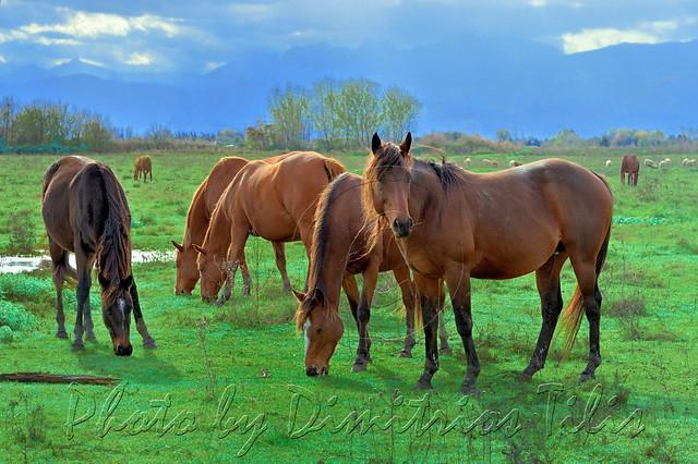 Έξι σέξι κοκκινομάλλες καλλονές για έναν επιβήτορα                                                             Six sexy red-haired beauties for a stallion