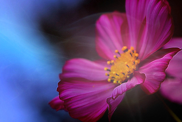 My favorite flower :-)