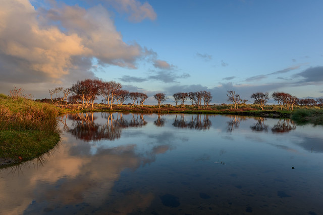 vlieland birch trees