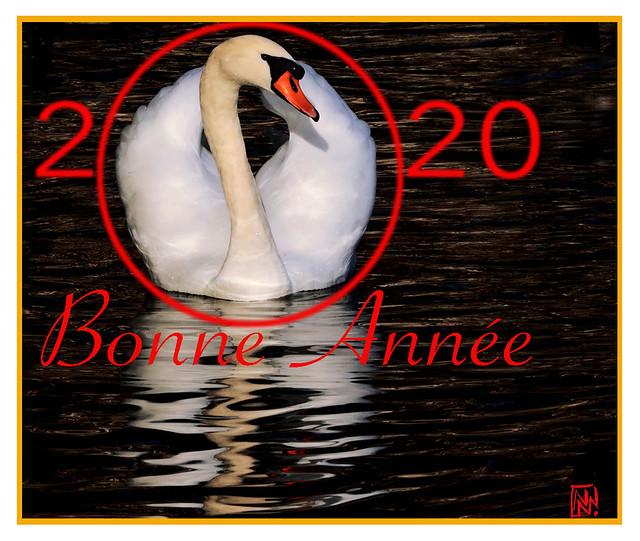 Une nouvelle année sous le signe du cygne.....
