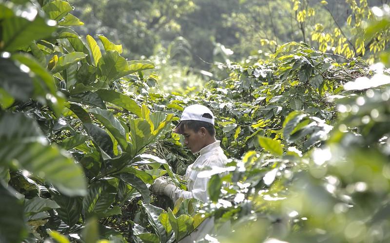 Tổng quan về ngành cà phê Việt Nam | PrimeCoffee