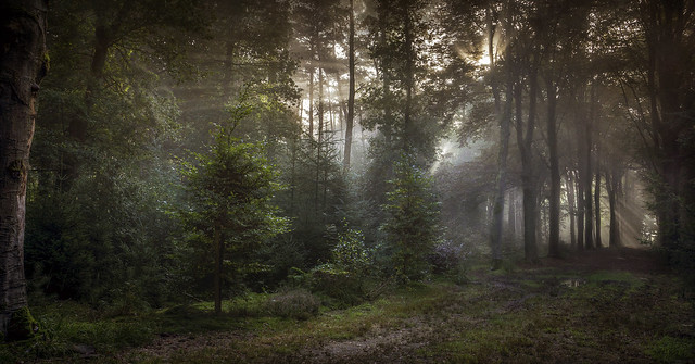A forest called
