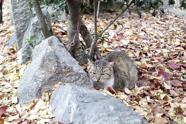 Today's Cat@2019-12-31