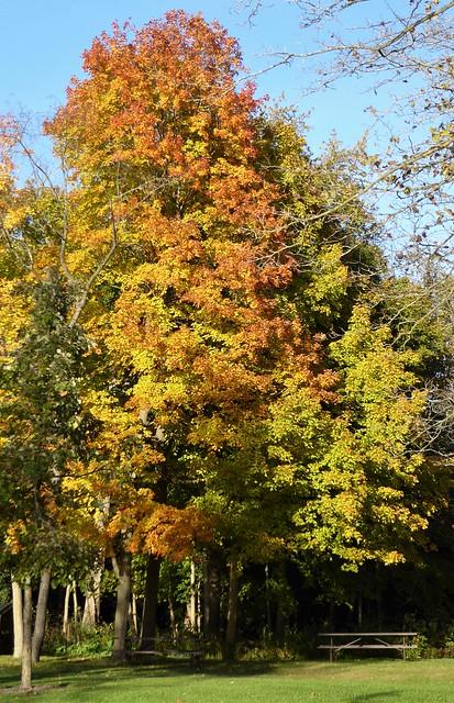 Warrenville, IL, Herrick Lake Forest Preserve, Fall Foliage