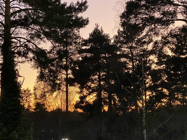 364/365- Forest Sunset