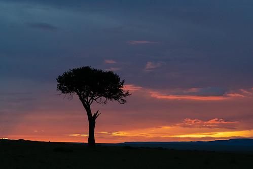 kenya wildlife massaimara olaremotorogi motorogiconservancy sunset accacia 2019 clouds masaimara siana narokcounty