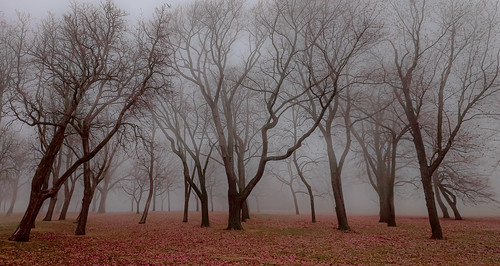 forest grove woods trees winter leaves landscape nature lawn wisconsin mist fog overcast