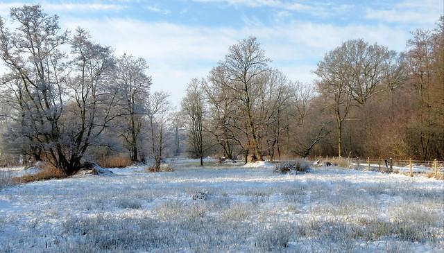 Askham Bog in winter
