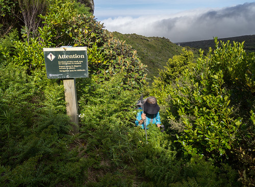 aroundthemountaincircuit attention egmontnationalpark mountegmont mounttaranaki newzealand newzealandnativebush northisland taranaki bush hiking landscape navigation overgrown sign trail tramping warning