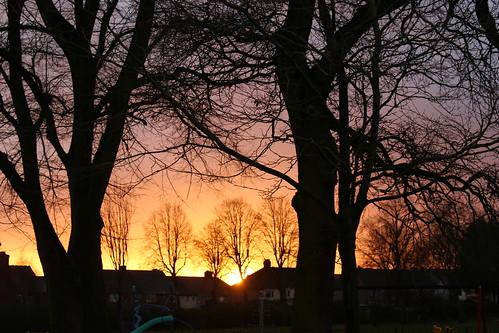 sunrise sky tree house park nuneaton