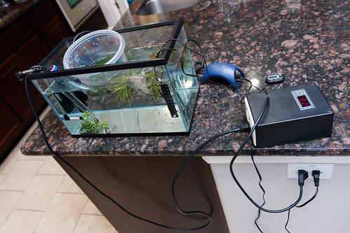 freshwater quarantine tank