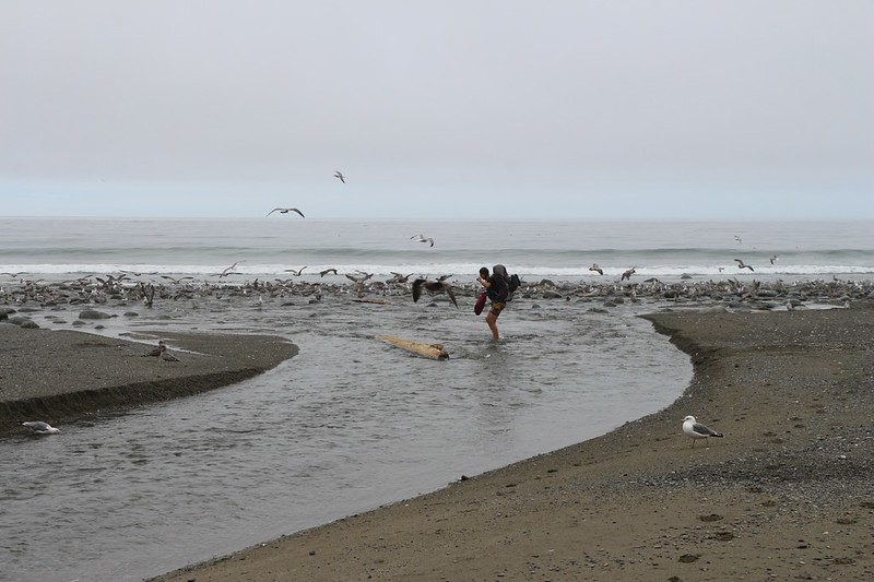 Vicki carries her shoes in a dry bag as she crosses Carmanah Creek amidst plenty of seagulls