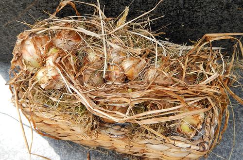 A basket of wild garlic at the Hidden Church in Llangollen, Wales