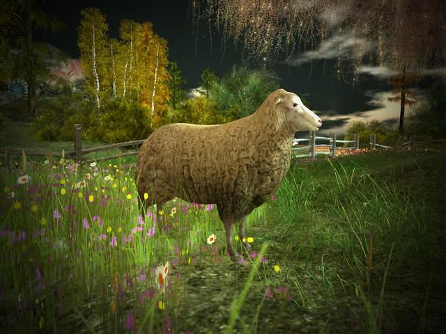 Mimmo - White Sheep At Night
