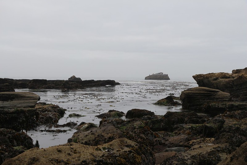 A small cove with kelp and a seal-topped island just offshore, near Carmanah Point