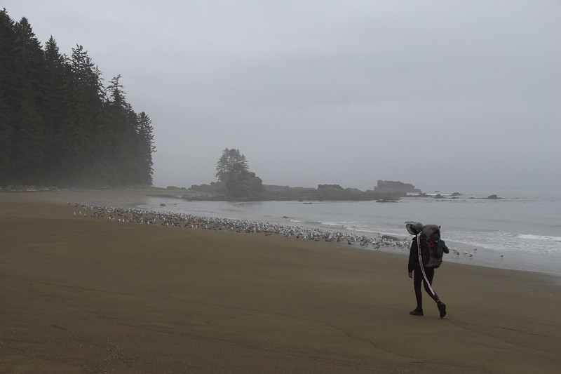 Seagulls hanging out along shore as we head south toward Carmanah Point