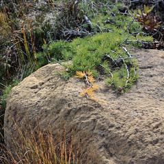 One precious seed, Green Gardens trail - Gros Morne National Park