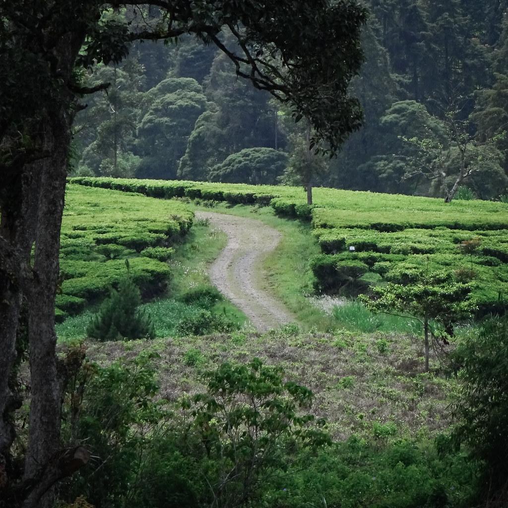 Cisanti - Pangalengan 2019 Year-End Ride