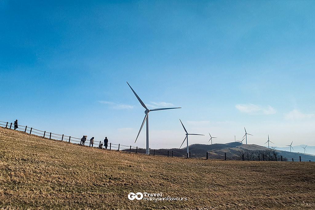 Daegwallyeong-Samyang-Ranch-3
