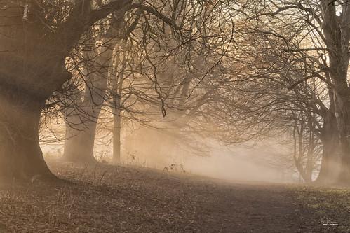 devon trees sunset mist bird shobrooke christmas crediton landscape wood woods park limetrees winter