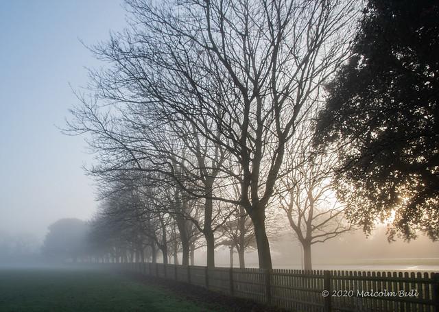 Foggy Morning - Buckingham Park (07)